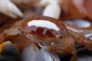 Four tiny crabs wash up on Brighton beach after more than 3,000 mile voyage